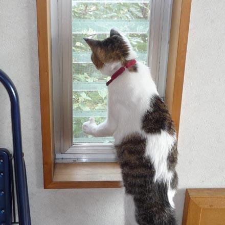窓越しにセミを見付けた凛