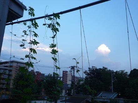 ゴーヤと雲