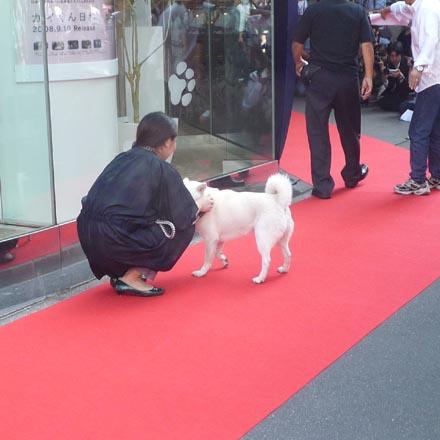銀座のソフトバンク犬①.