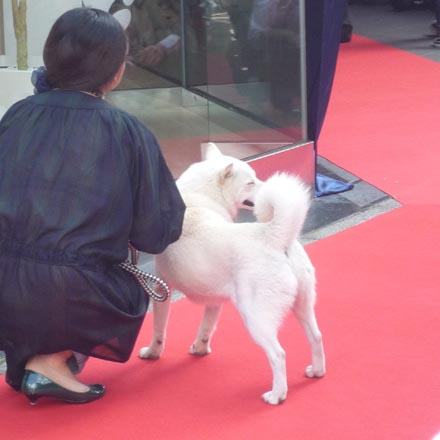 銀座のソフトバンク犬②