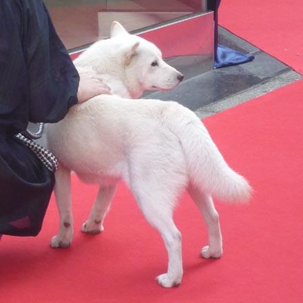 銀座のソフトバンク犬③