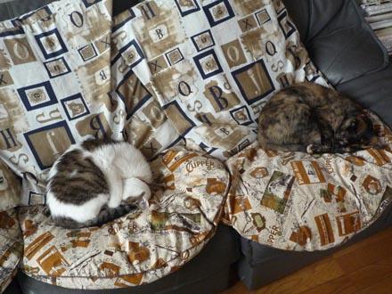 今年初のダブル猫饅頭