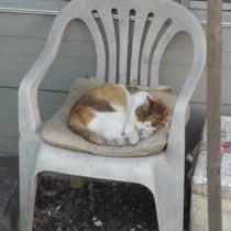 ペリーロードの猫1