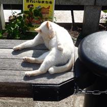ペリーロードの猫2