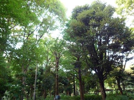 新宿公園の深い緑
