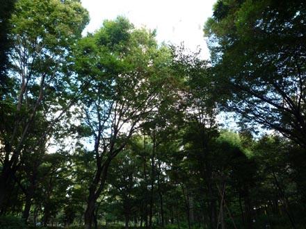 新宿公園の深い緑②.