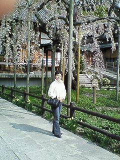 200804070856000太山寺の枝垂れ