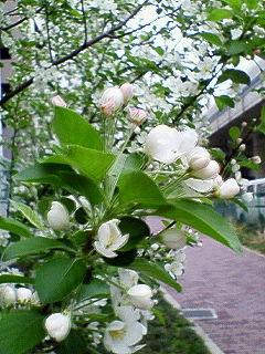200804131700000花
