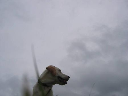 雨が降りそう・・・