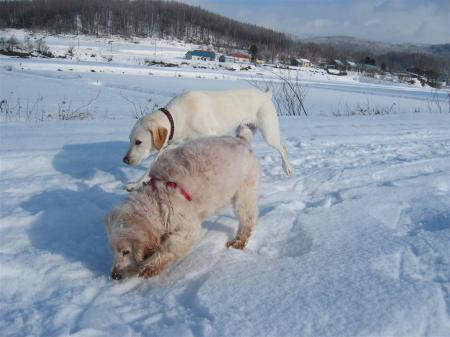 雪の下から何か匂うゾ・・・