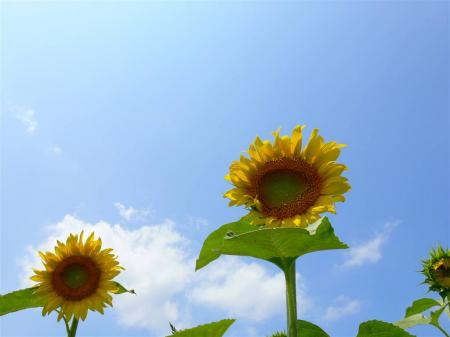 夏の風物詩