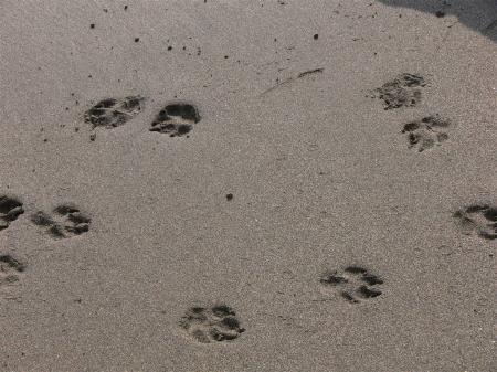 束の間の夢の後・・・足の跡・・・次の波までの・・・