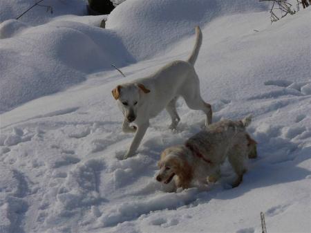 まっさらの雪原に無数の足跡が・・・