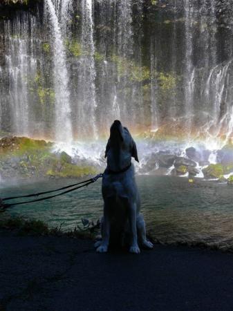 自然の恵みを授かるウイッシュ