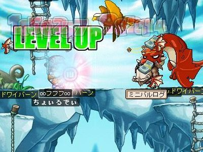 Maple1600.jpg