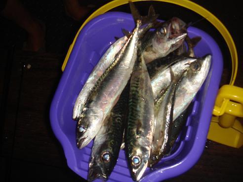 FISHING 058
