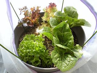 garden0201-3.jpg