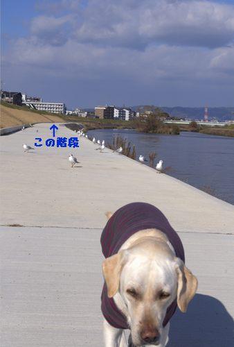 100101散歩7