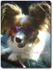 doggles K9 pink