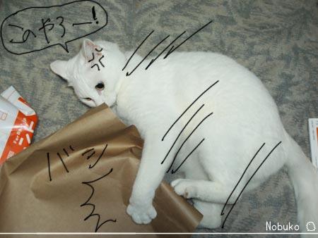 袋と猫その後