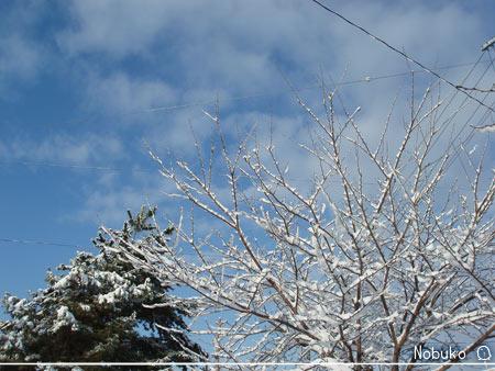 空と雪景色