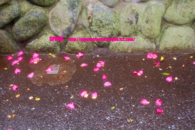 雨にぬれた堕ちた花びら