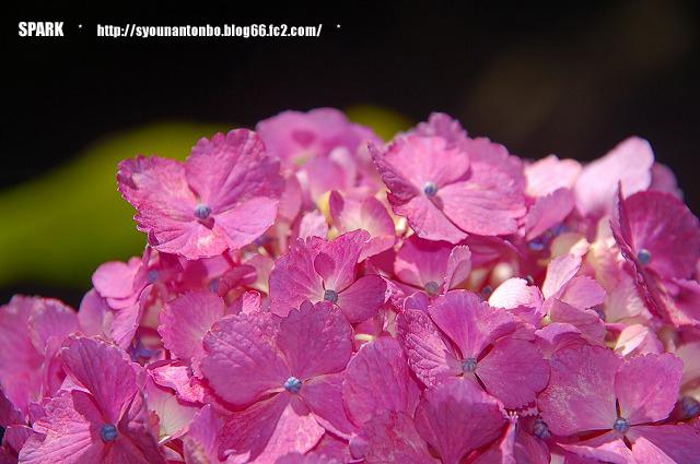 花を撮るのは久しぶり