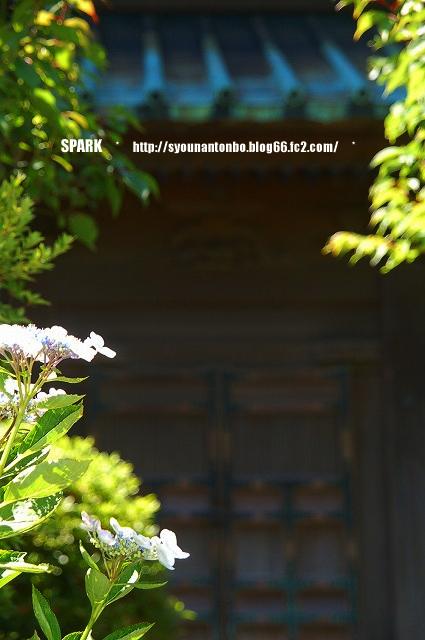 あじさいの時期の鎌倉は大混雑