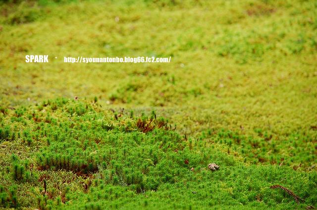 苔がすごくスキ