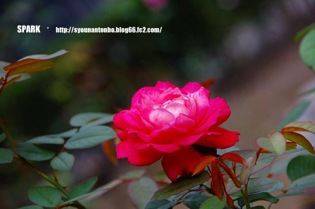 久々に花を撮った