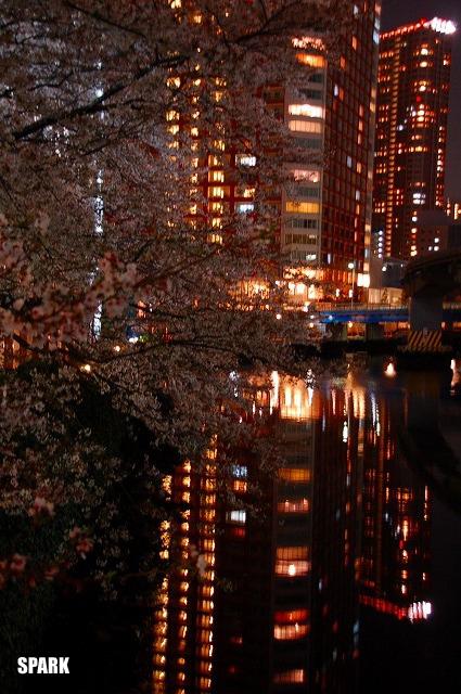 都会の中の夜桜