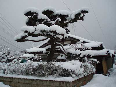 0116大雪の日 001