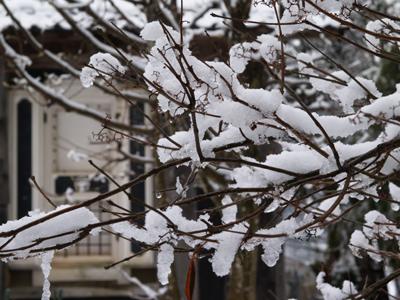 e300枝に雪