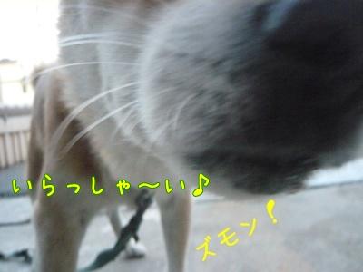 P1160033_20091004203806.jpg