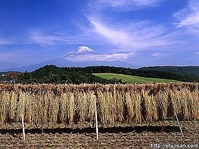 秋の富士山 s