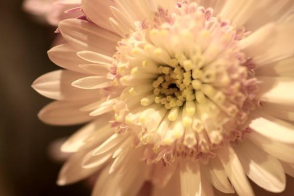 20061120flower2.jpg