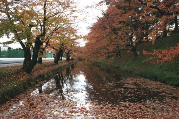 200611hirosaki2.jpg