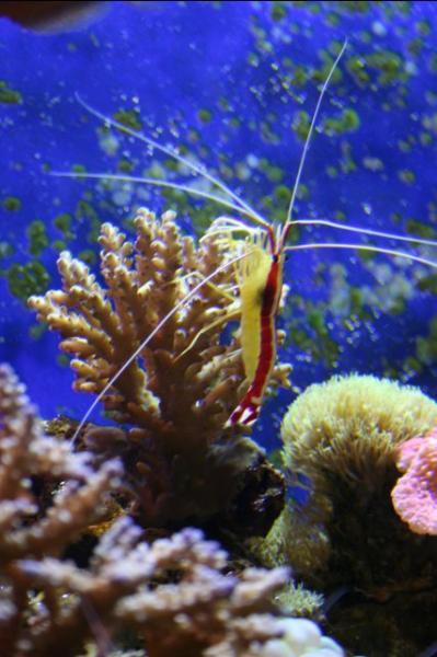 20061202fish2.jpg
