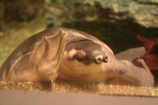 20061202fish3.jpg