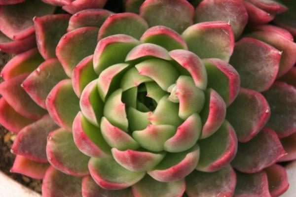20070301flower2.jpg
