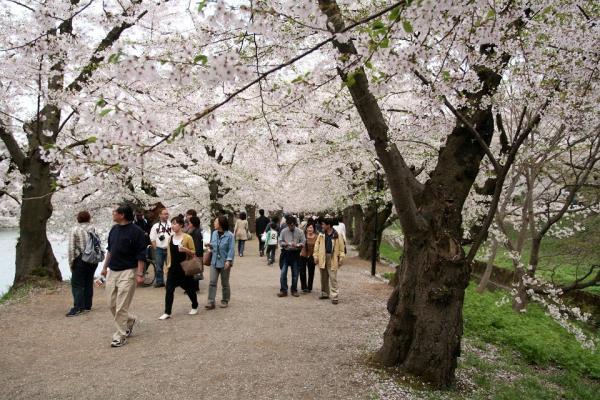 20070504hirosaki2.jpg