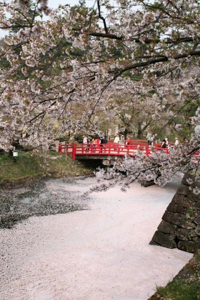 20070504hirosaki8.jpg