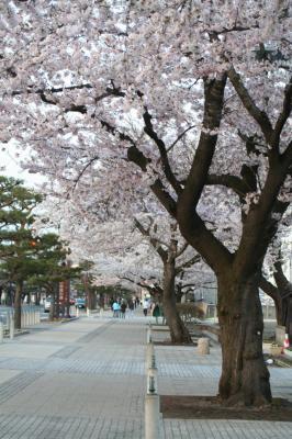 towada-kantyougai3.jpg