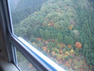 上空からの紅葉