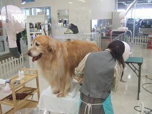 犬の美容院