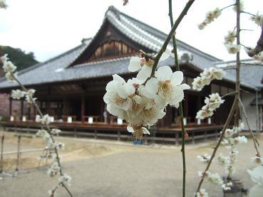 弘道館と梅