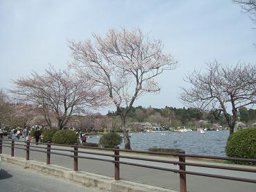 桜と千波湖
