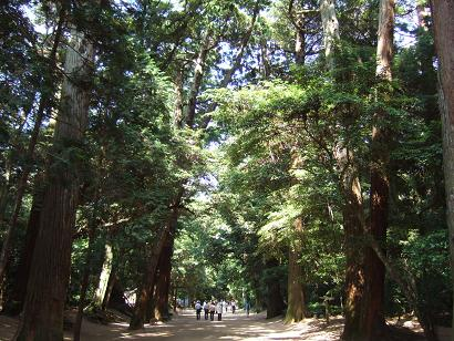 境内の杉林