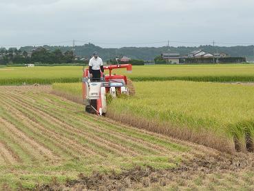 早くも稲刈りが行われています。