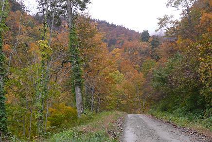湯の華への林道での紅葉
